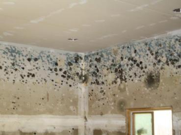 Mold Removal Los Angeles